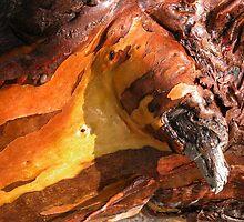 Yellow Gum, Hanson's Track,Cradle Mountain,Tasmania, Australia. by kaysharp