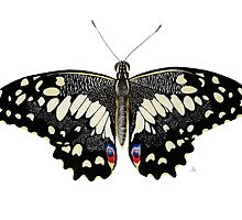 The Swallowtail Butterfly by aquartistic