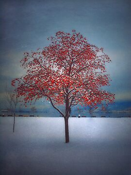 The Winter Berries by Tara  Turner