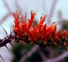 Cactus Flower by William Newland