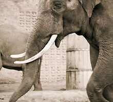 Elephant by Cvail73