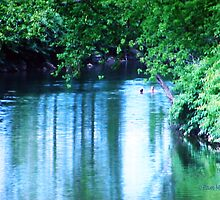 The Swimming Hole by Pam Moore