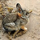 Badlands Bunny by Graeme  Hyde