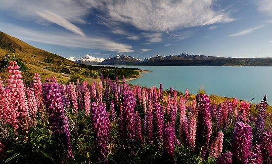 Pukaki Postcard by Robert Mullner