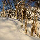 Snow - 2009 by Bru66