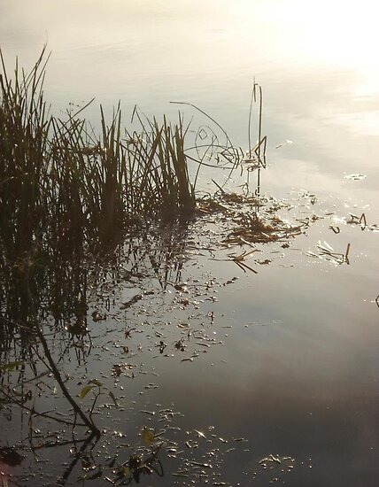 Reeds on Econfina by May Lattanzio