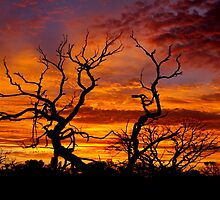 Orange Sunset in Roxby Downs by Danielle Gillies
