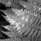 Ferns in dappled light by Duncan Waldron