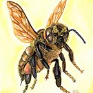 Bee  by Elaine Bawden