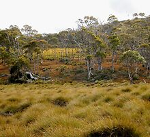 Button Grass and Alpine Coral Fern,Cradle Mountain,Tasmania,Australia. by kaysharp