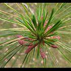 Pine Flower by kayesem