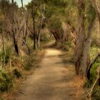 Walkway, Yanchep National Park, Western Australia by Elaine Teague