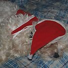 santa dog by sharon wingard