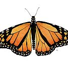 The Monarch Butterfly by aquartistic