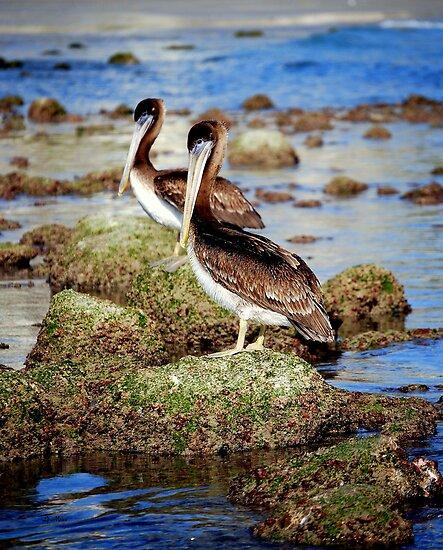 Pelicans so patient by LjMaxx