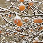 Snow and Kaki Fruit by Pamela Jayne Smith