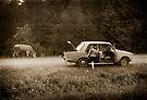 Oksana & the Cow, Ukraine by Yuri Lev