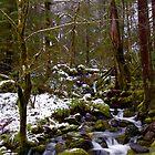 Haystack Creek, winter snow by Allan  Erickson