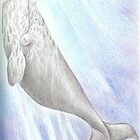 Southern-right whale - pencil on paper by Bianca Todd