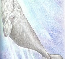 Southern-right whale - pencil on paper by beet09