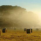 Rolling Mist by Gordon Slater