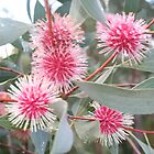 Pincushion Hakea by Jeff Hobbs