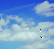Blue Skies and Fluffy White Birds by lucyalexandra