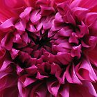 Dahlia Heart by KMorral