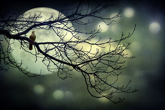 Moonstruck by © Kira Bodensted