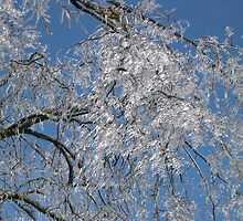 Frozen Icicle Tree by Spyder761