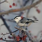 Nuthatch With Berries by Deborah  Benoit