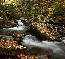Little Stony Creek by Amy Jackson