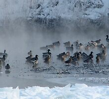 Ducks On Foggy River by swaby
