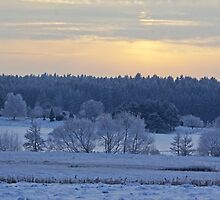 Winter in Sweden # 3 by Paola Svensson