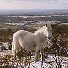 Dartmoor: Snowy White by Rob Parsons