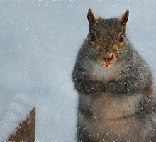 I'm Chilly!! by Lori Deiter