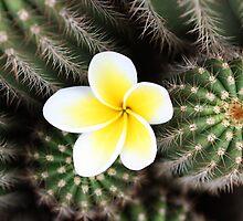 frangipani and cactus by Karlee Lynam