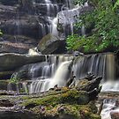 Tree Stump at Somersby Falls by Mike Salway