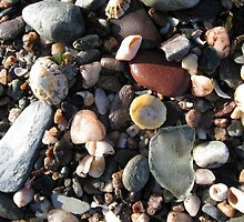 Sea shore flotsam and jetsam from Bute, Scotland by narbs