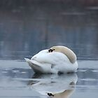 Swan Resting on Ice by Karl Tatgenhorst