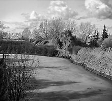 The Calgary Zoo Landscape by Ellen Cotton