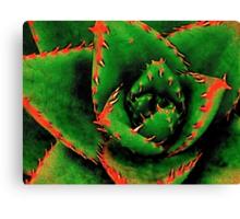 Green Succulent Canvas Print