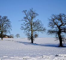 3 Trees by Karen  Betts