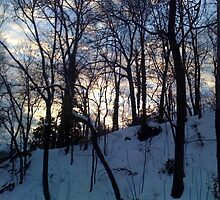 Evening After Big Snowstorm (1) by SylviaS