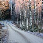 Frosty walk by tanmari