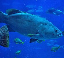 Deep Blue - GROUPER by Dennis Stewart