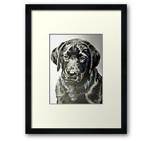Black lab puppy by artist Debbie Boyle - db artstudio Framed Print
