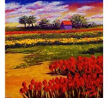 Red Tulips in the Netherlands Photographic Print