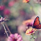 Faded flowers and one last butterfly by Colleen Rudolph