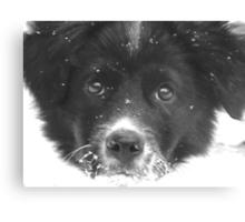 Dottie's First Snow Canvas Print
